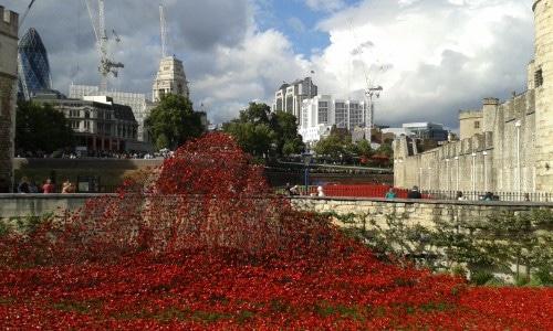 In 2014 (100 jaar na het begin van WW I) werden er bij The Tower in Londen zoveel kunststoffen klaprozen geplaatst als er Britse slachtoffers waren gevallen in de Eerste Wereldoorlog.